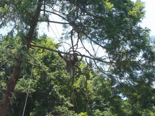 危険木 特殊伐採