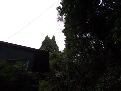 千葉 特殊伐採
